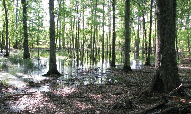 Green_Pond2