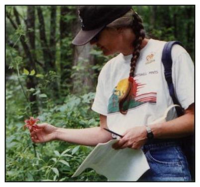 Swan Trust biologist Cynthia Rohrbach  admires a rare Canada lily.