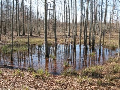 Green Pond.